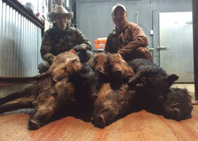 Harvested 2016 Hogs