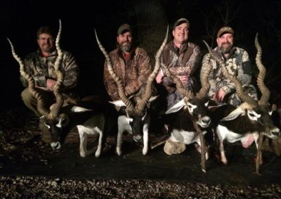 harvested blackbuck 8